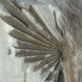 fossilien entstehung grundschule